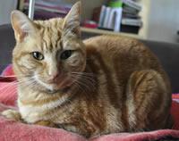 Ginger tabby cat sat on blanket