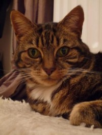 Tabby and white cat sitting on blanket