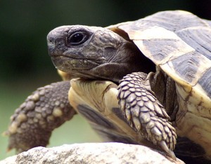 tortoise head photo