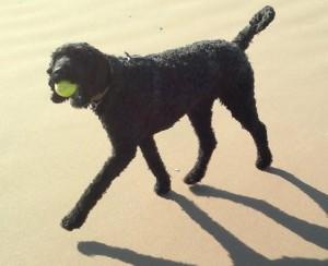 Testimonial picture for animal communication of dog called Junebug