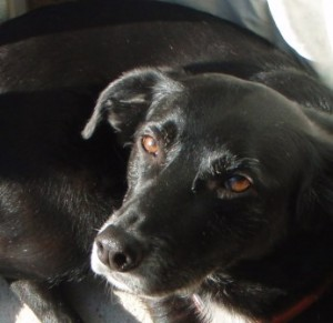 Testimonial picture for animal communication of Monty the dog