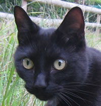 face of black cat outside in the garden