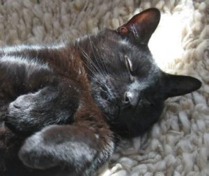 Black cat asleep on back with paws in the air