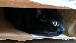 cat hiding in a bag
