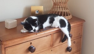 Black and white cat sleeping on chest of drawers